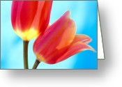 Featured Artwork Prints Greeting Cards - Tulips on Blue 2 Greeting Card by Kathy Yates