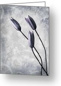 Day Greeting Cards - Tulips Greeting Card by Photodream Art