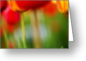 Green Photo Greeting Cards - Tulips Greeting Card by Silke Magino