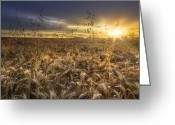Oats Greeting Cards - Tumble Wheat Greeting Card by Debra and Dave Vanderlaan