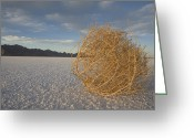 Tumbleweed Greeting Cards - Tumbleweed On The Bonneville Salt Greeting Card by John Burcham