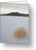 Tumbleweed Greeting Cards - Tumbleweed Spinning Over The Bonneville Greeting Card by John Burcham