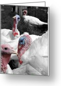Poultry Photo Greeting Cards - Turkey Party Greeting Card by Sophie Vigneault