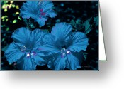 Turquois Greeting Cards - Turquois Trio Greeting Card by DigiArt Diaries by Vicky Browning