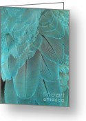 Feathery Greeting Cards - Turquoise Feathers Greeting Card by Sabrina L Ryan