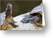 Green Eyes Greeting Cards - Turtle conversation Greeting Card by Elena Elisseeva