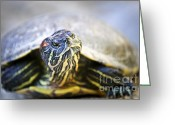 Green Eyes Greeting Cards - Turtle Greeting Card by Elena Elisseeva