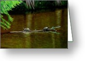 Reptiles Painting Greeting Cards - Turtle Log Spa Greeting Card by Doug Strickland