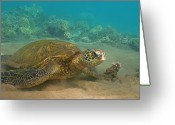 ; Maui Greeting Cards - Turtle Magic Greeting Card by Brian Governale
