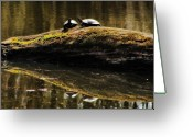Wood Turtle Greeting Cards - Turtle Reflections Greeting Card by Scott Hovind