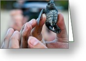 Pancho Greeting Cards - Turtle release in San Pancho Greeting Card by Atom Crawford