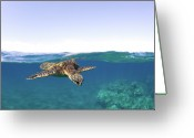 Pacific Islands Greeting Cards - Turtle Split View Greeting Card by Monica and Michael Sweet