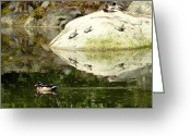 Wood Turtle Greeting Cards - Turtles and Ducks Greeting Card by Cindy Wright
