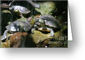 Colorado Creatures Greeting Cards - Turtles Greeting Card by Crystal Garner