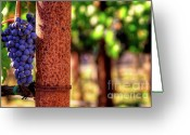 Fall Photographs Greeting Cards - Tuscan Beauty Greeting Card by Mars Lasar