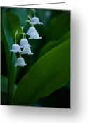 Kentucky Greeting Cards - Tuska Bells Greeting Card by Wayne Stacy
