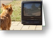Old Tv Digital Art Greeting Cards - TV Watching Dog Greeting Card by Susan Stone