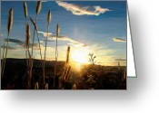 Surroundings Greeting Cards - Twighlight Barley Greeting Card by James Shepherd