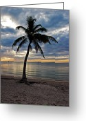 Smathers Beach Greeting Cards - Twilight Palm Tree Key West Florida Greeting Card by John Stephens