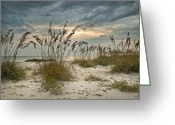 Oats Greeting Cards - Twilight Sea Oats Greeting Card by Steven Sparks