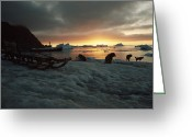 Domestic Scenes Greeting Cards - Twilight View Of Sled Dogs And Sled Greeting Card by Bill Curtsinger