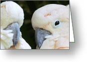 Talking Birds Greeting Cards - Twin Beaks Greeting Card by Lori Lafargue