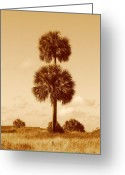 Cabbage Palm Trees Greeting Cards - Twin Palms Greeting Card by Peg Urban
