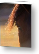 Twinkle Greeting Cards - Twinkle Eyed Horse Greeting Card by Angie Wingerd