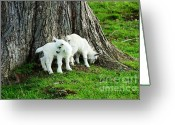 Kid Photo Greeting Cards - Twins at Play Greeting Card by Thomas R Fletcher