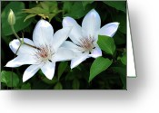 Designers Choice Photo Greeting Cards - Twins  Greeting Card by Don  Wright