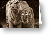 Intent Greeting Cards - Twins of India Greeting Card by Douglas Barnett