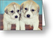 Two By Two Greeting Cards - Twins Puppies Greeting Card by Christina Esselman