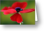 Flower Art Greeting Cards - Twirling Red Greeting Card by Juergen Roth