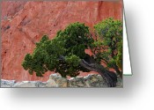 Ute Greeting Cards - Twisted Juniper - Garden of the Gods Greeting Card by The Forests Edge Photography