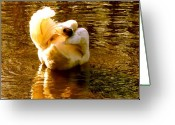 Eutemey Greeting Cards - Twisted Swan Greeting Card by Kendall Eutemey