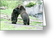 Ken Sjodin Greeting Cards - Two bears Greeting Card by Ken  Sjodin