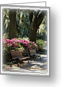 Park Benches Greeting Cards - Two Benches in Savannah Greeting Card by Carol Groenen
