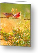 House Finch Greeting Cards - Two Birds On A Wire Greeting Card by Wingsdomain Art and Photography