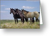 Buckskin Horse Greeting Cards - Two Blue Roans and a Dun Greeting Card by John Guthrie
