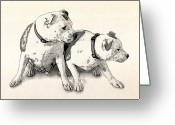 Stafford Greeting Cards - Two Bull Terriers Greeting Card by Michael Tompsett