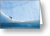 Winter Views Greeting Cards - Two Chinstrap Penguin Chicks Rest Greeting Card by Paul Nicklen
