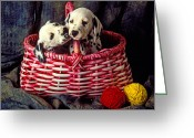 Hound Greeting Cards - Two Dalmatian Puppies Greeting Card by Garry Gay