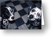Domestic Scenes Greeting Cards - Two Dalmatians Look Up From A Black Greeting Card by Nadia M.B. Hughes