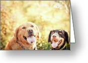 Panting Dog Greeting Cards - Two Dogs Greeting Card by Jessica Trinh