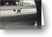 Friend Greeting Cards - Two Dogs Greeting Card by Toni Hopper