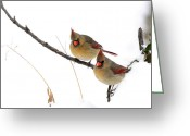 Cardinals In Snow Greeting Cards - Two females sitting in snow talking Greeting Card by Randall Branham