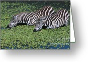 Lettuce Green Greeting Cards - Two For Lunch Greeting Card by Sandra Bronstein
