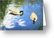 Geese Greeting Cards - Two Geese Greeting Card by Scott Norris
