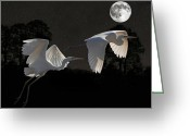 Lesvos Greeting Cards - Two Great Egrets  Greeting Card by Eric Kempson