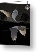 Hera Greeting Cards - Two Great Egrets In Flight Greeting Card by Eric Kempson